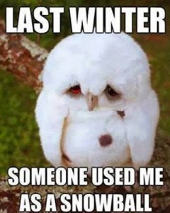 funny-winter-sad-owl-meme